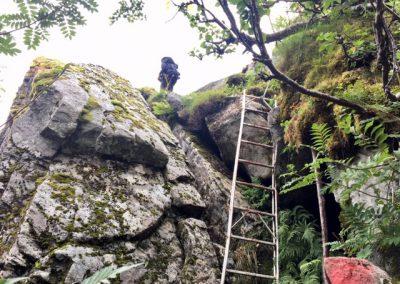 Rots ladder