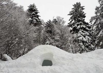 Sneeuw onderkomen